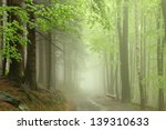 Path Through The Forest In The...