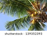 palm tree and holiday in... | Shutterstock . vector #139352393