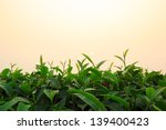 tea field | Shutterstock . vector #139400423