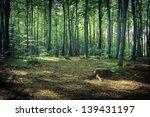 Mysterious Dark Forest Near...