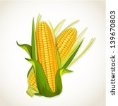 ripe corn on the cob | Shutterstock .eps vector #139670803
