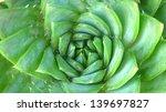 Spiral Aloe Plant