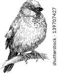 sparrow | Shutterstock .eps vector #139707427