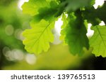 green oak leaves | Shutterstock . vector #139765513
