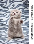 Stock photo kitten playing 139861507