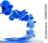 Blue Orchid Background With...