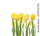Tulips Isolated On White...