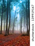 Mystic Foggy Forest In Bright...