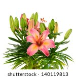 colorful pink lilies bouquet | Shutterstock . vector #140119813