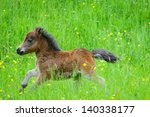 miniature horse portrait in...