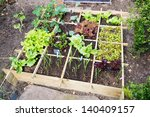 Vegetable Garden With...