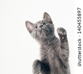Stock photo playful russian blue kitten isolated on white 140455897