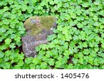Clover Patch In The Forest Wit...