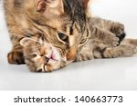 mother cat taking her kitten by ... | Shutterstock . vector #140663773