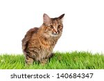 funny kitten cat on green grass | Shutterstock . vector #140684347