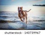Stock photo the dog in the water swim splash 140739967