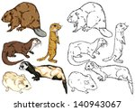drawing and contour of wild animal species living in the forest, steppe and plains, animals rodent, small sized, semi-aquatic - stock vector