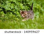 Stock photo tabby kitten walking on the grass 140959627