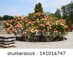 Stock photo details of a wonderful rose garden or rosarium in lyon 141016747