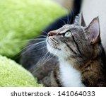 Cat Portrait Close Up Body Cro...