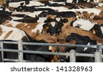 Crowded Cows