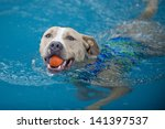 a swimming pit bull dog... | Shutterstock . vector #141397537