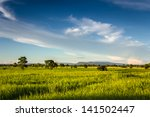 Landscape Of Field And...