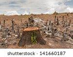slash and burn cultivation ... | Shutterstock . vector #141660187