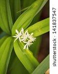 white flowers on long green... | Shutterstock . vector #141837547