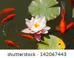 Pink Water Lily In The Lake...