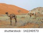 camel and baby  calf  in wadi... | Shutterstock . vector #142240573