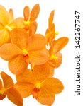 Orange Orchid Isolated On White