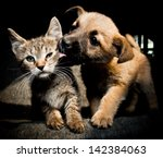 Stock photo puppy kitty lick kiss and love 142384063