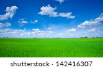 Rice Field Green Grass Blue Sk...