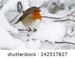 Robin  Erithacus Rubecula ...