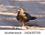 Kite Bird Omnivorous Predator...