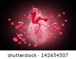 human heart circulation... | Shutterstock . vector #142654507