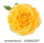 Yellow Rose Closeup Isolated O...
