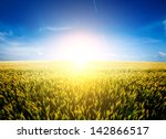 wheat field background | Shutterstock . vector #142866517