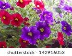summer flowers.   Shutterstock . vector #142916053