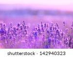 lavender flowers | Shutterstock . vector #142940323