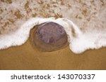 jellyfish on robberg beach ... | Shutterstock . vector #143070337