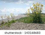 Suffolk Gravel Beach In...