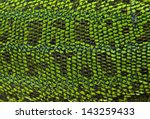 Leather Green Lizards Closeup