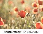Poppies On Green Summer Field...