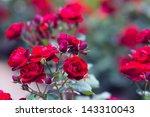 Stock photo roses 143310043
