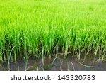 fresh spring green grass   Shutterstock . vector #143320783
