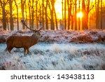 red deer | Shutterstock . vector #143438113