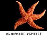 Starfish On Black Background