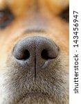 Close Up Of A Dog's Nose